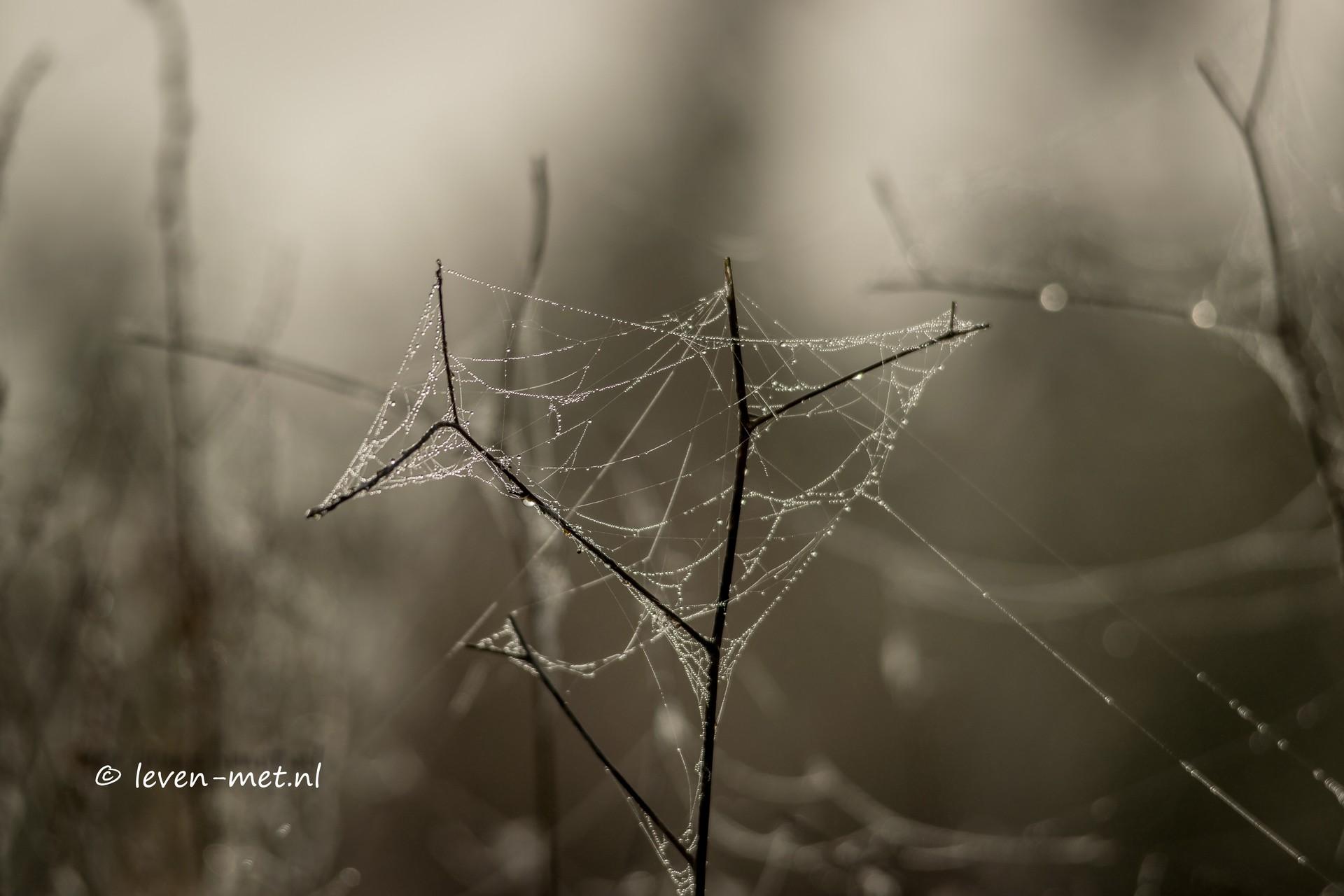 Mist in het Oostvaardersveld