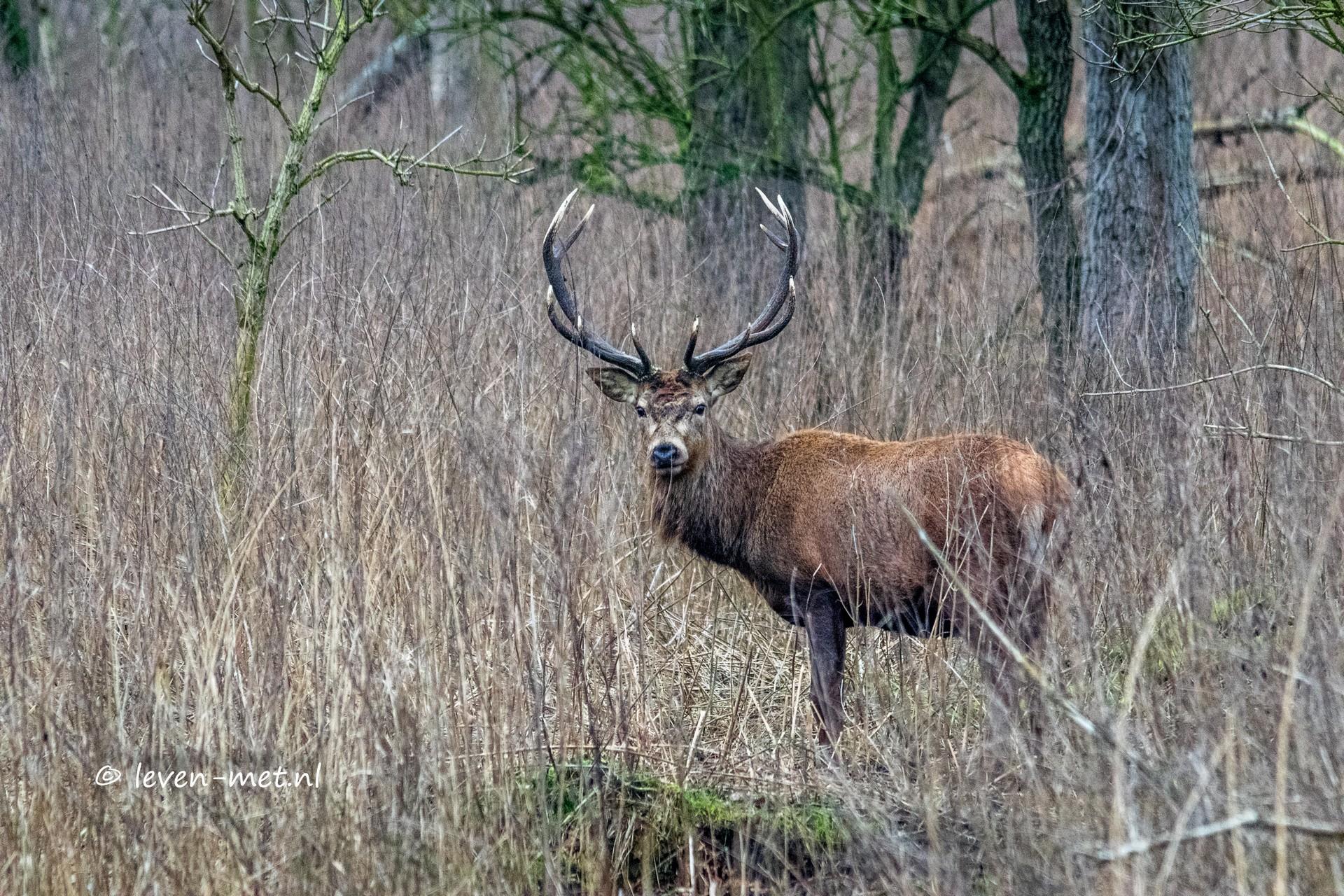 Oostvaardersbos & Kotterbos rondje