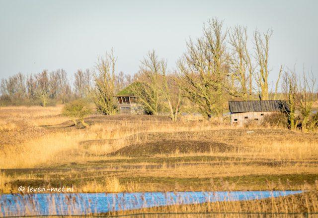 Controle rondje Oostvaardersbos & Oostvaardersplassen