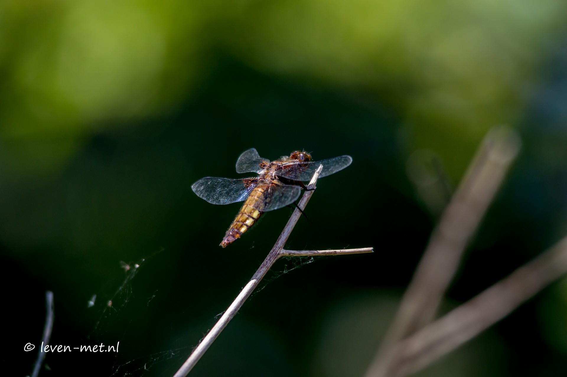 Libelle & vogels poelruiterhut