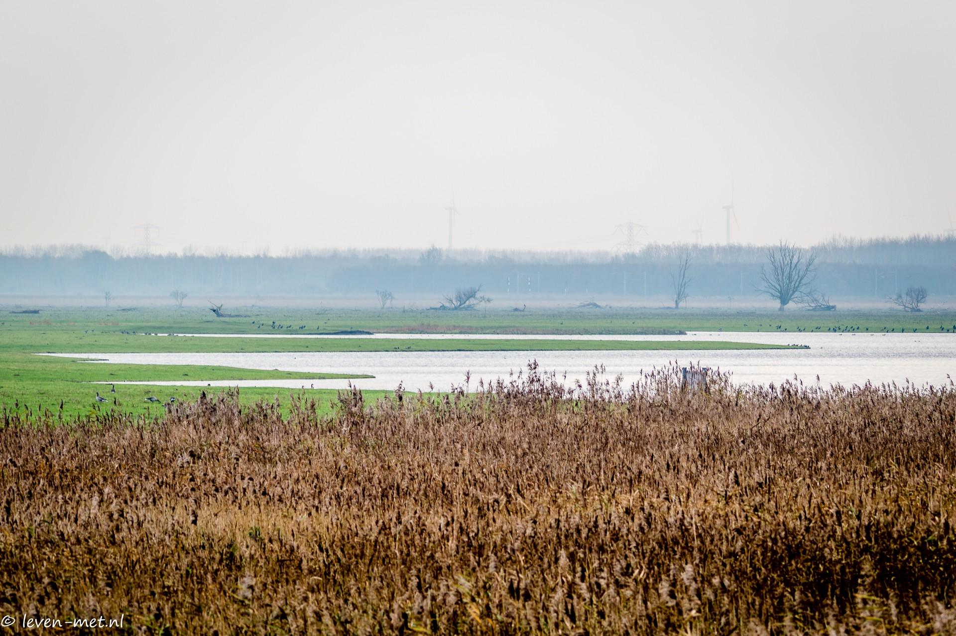 Oostvaardersplassen Almere