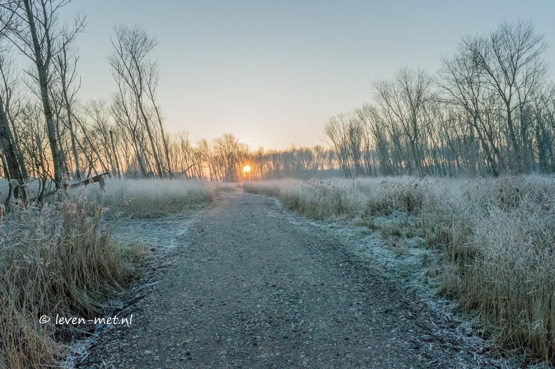 Update: Oostvaardersbos & zijn wandelpaden