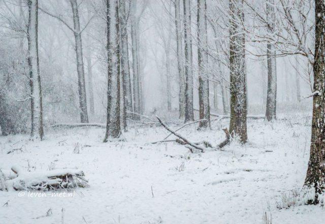 Winter plaatjes Oostvaardersbos