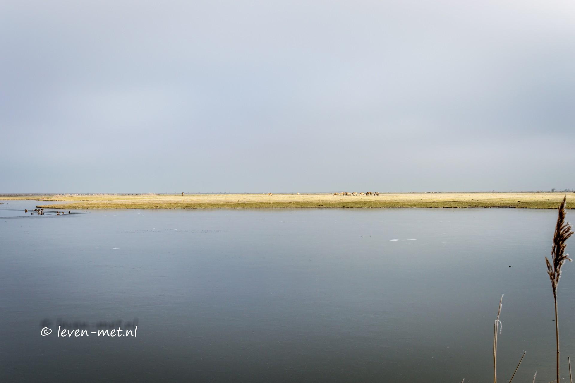 Een zeer koude ochtend in de Oostvaardersplassen