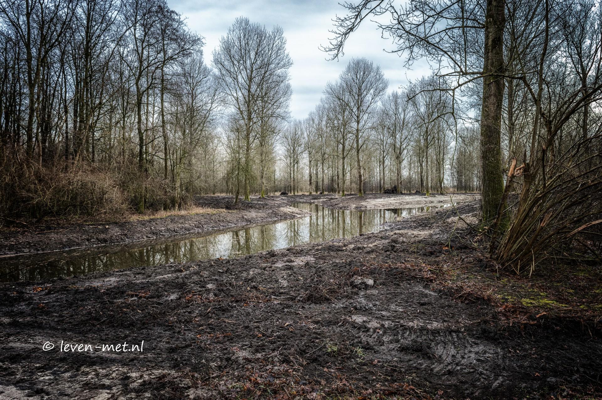 Hollandse hout slangentong