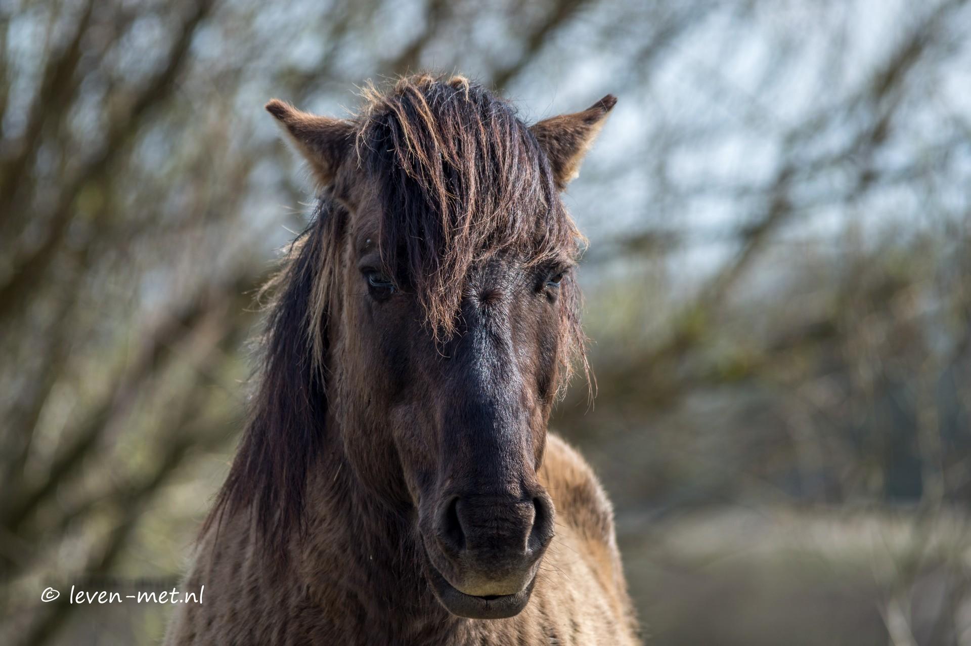 Konikpaarden & Oostvaardersveld