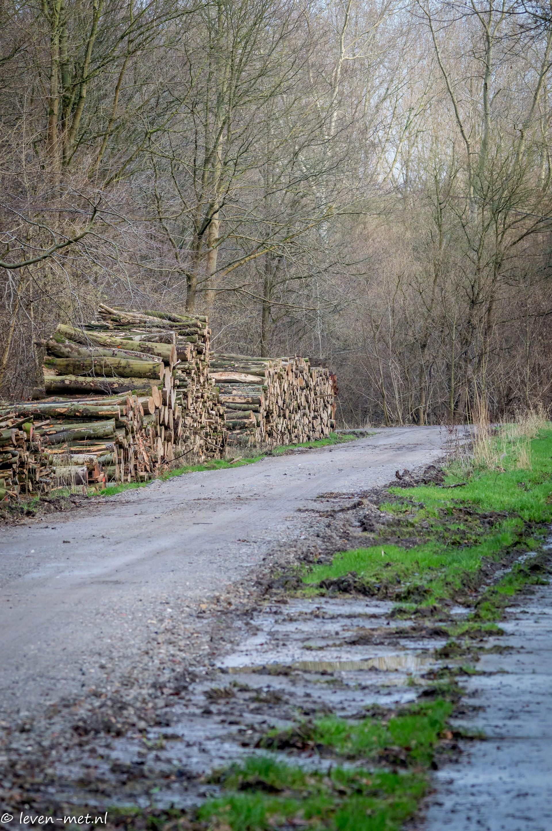 Hollandse hout oostvaardersveld
