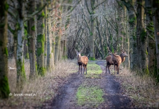 Bomenlaan Oostvaardersbos