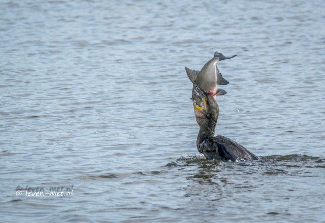 Vissers van het oostvaardersveld