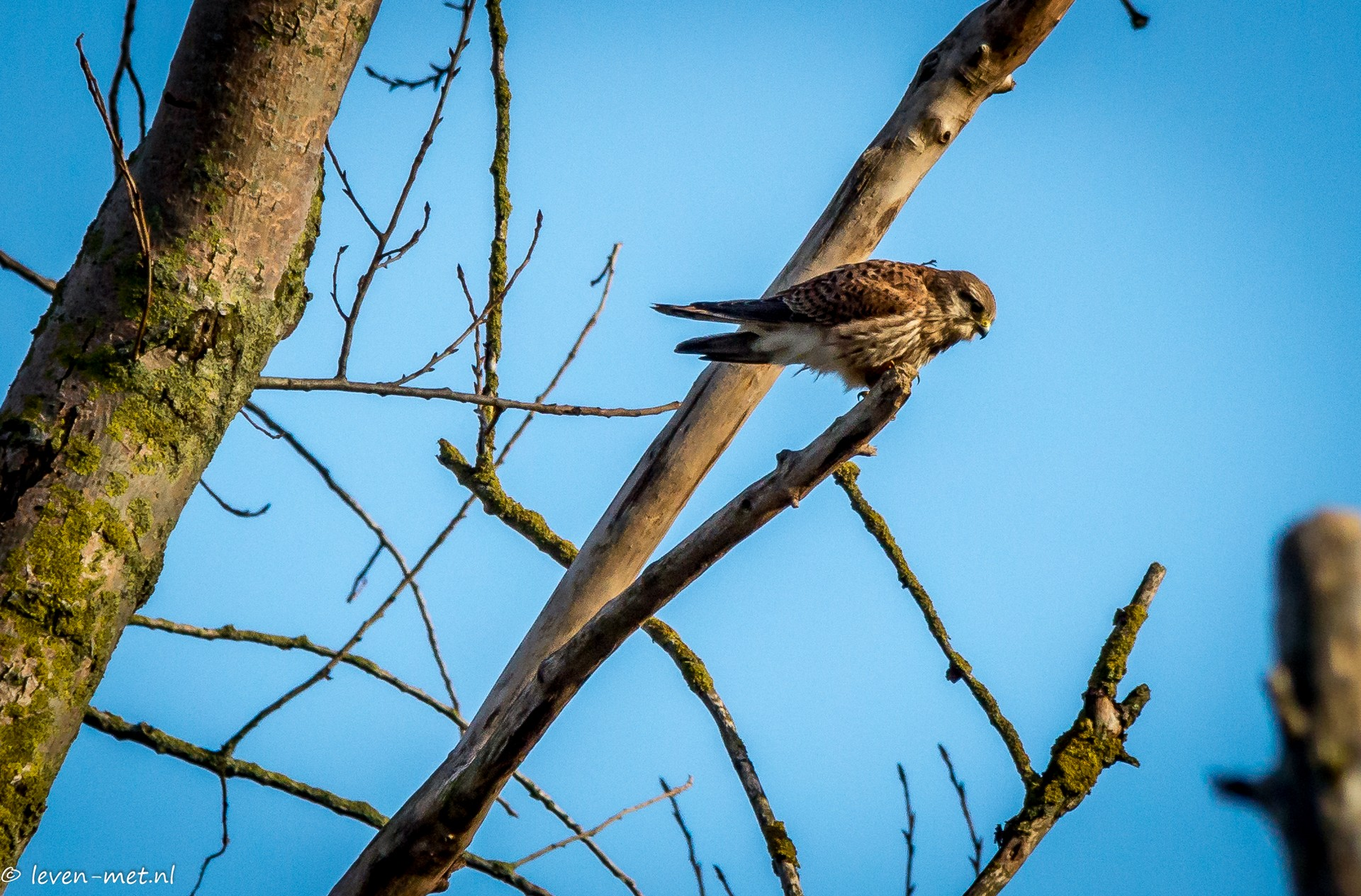 Fluitbos vogels