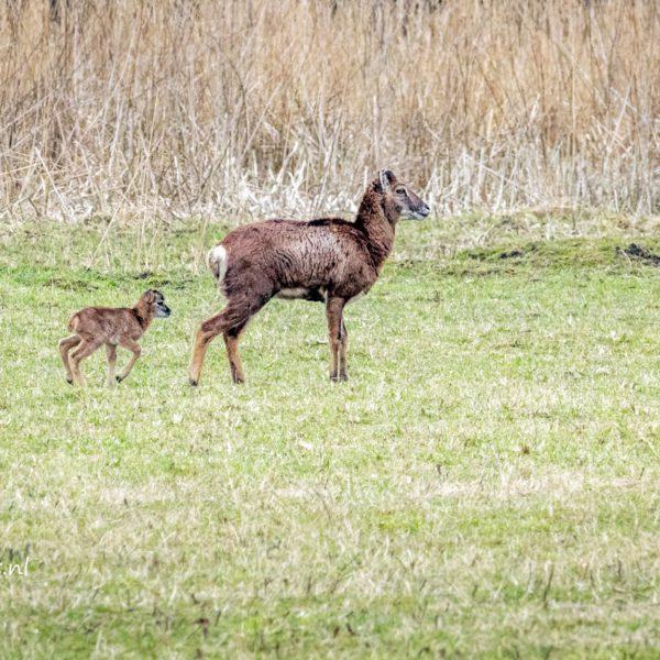 Natuurpark Lelystad en hun nieuwe aanwinsten